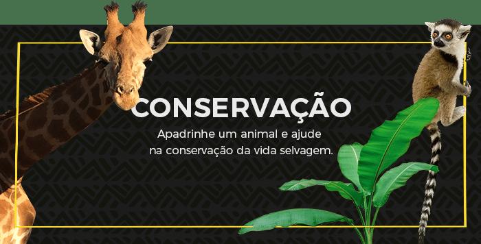 Conservação. Apadrinhe um animal e ajude na conservação da vida selvagem.