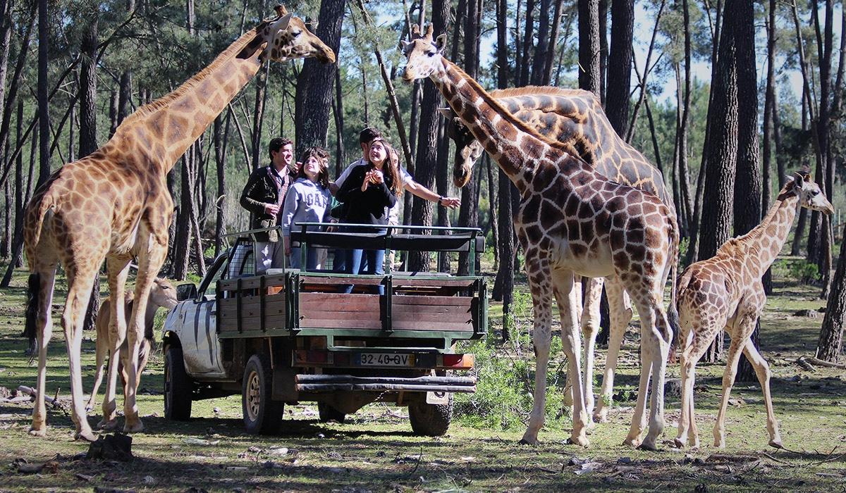 Resultado de imagem para safari badoca